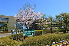 Img_7696